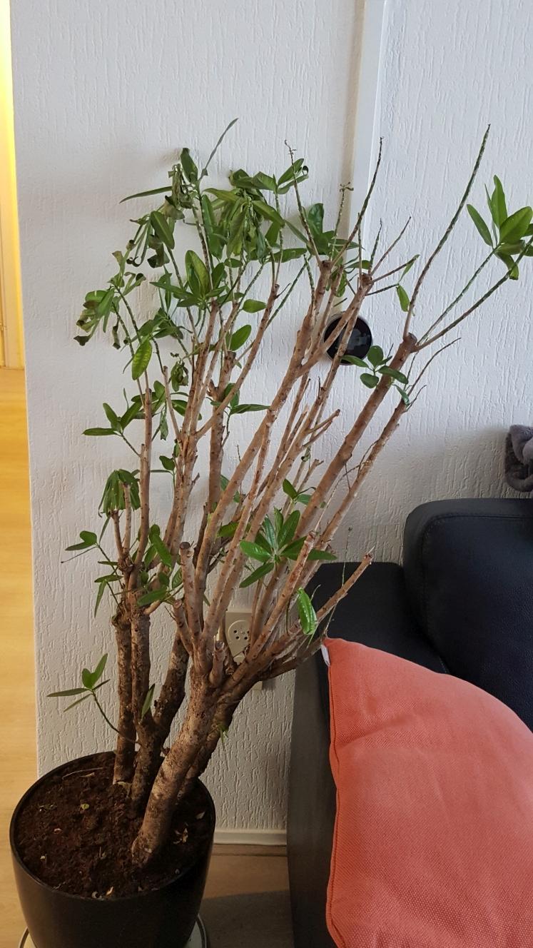 F f flo welke plant heb ik en wat scheelt er aan for Dus welke architectuur